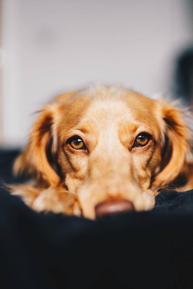 Professionell hjälp för ditt husdjur